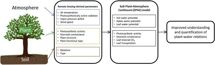 Remote sensing of plant-water relations: An overview and