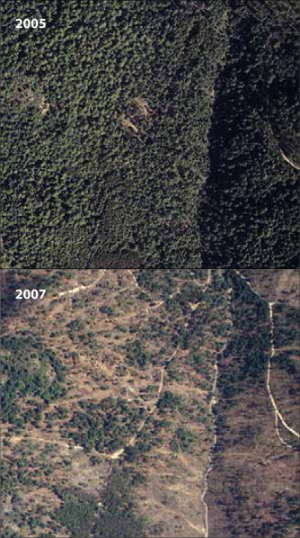 Monitoring changes of forest canopy density in a temperature