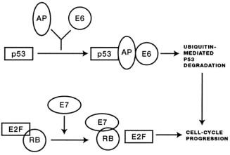 human papillomavirus infection epidemiology and pathophysiology