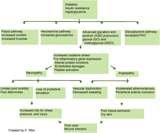 Diabetic foot ulcers: Part I. Pathophysiology and prevention ...