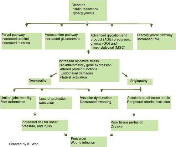 Diabetic Neuropathy Pathophysiology