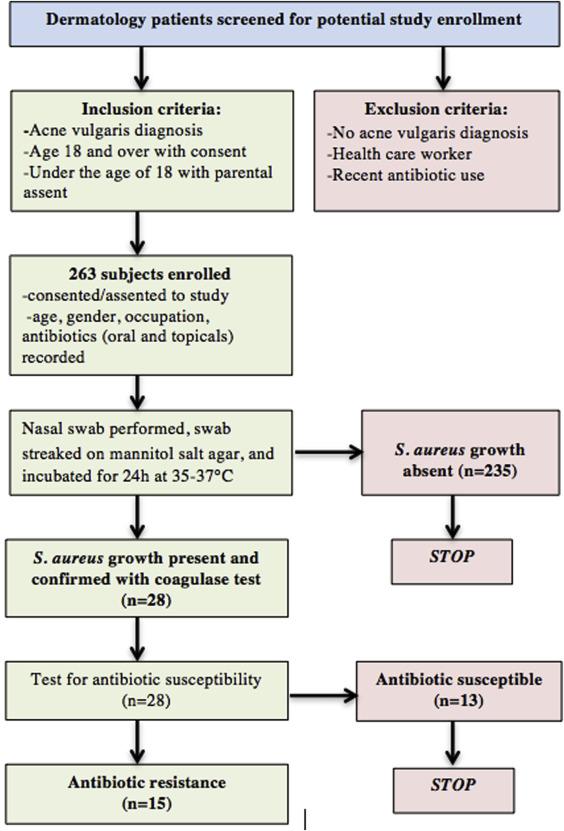 Staphylococcus Aureus Carriage Rates And Antibiotic Resistance
