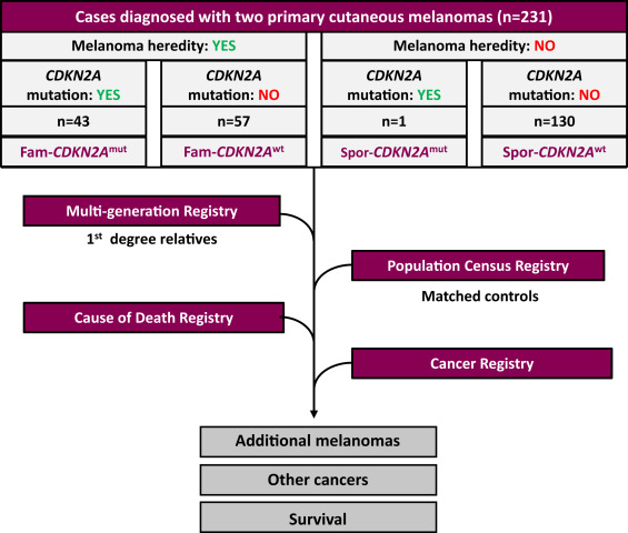 cdkn2a cancer risks and survival in patients with multiple primary