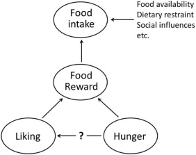 Image result for food reward