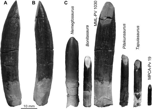 ÐаÑÑинки по запÑоÑÑ titanosaur teeth