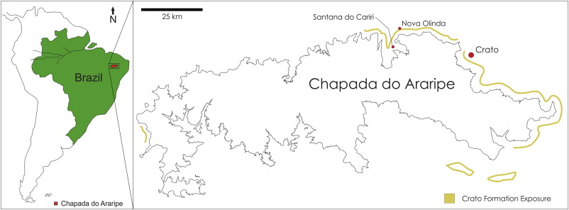 High Fidelity Preservation Of Fossil Insects From The Crato - Crato map