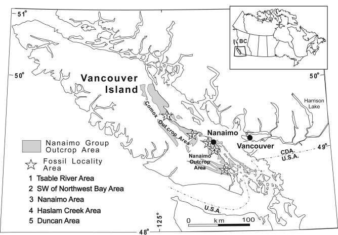 The Crinoid Marsupites In The Upper Cretaceous Nanaimo Group