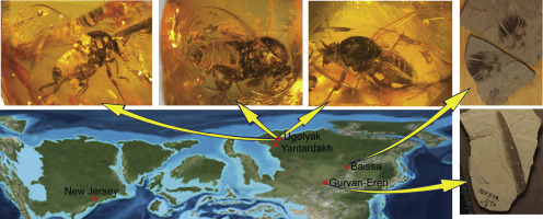 An unexpectedly abundant new genus of black flies (Diptera