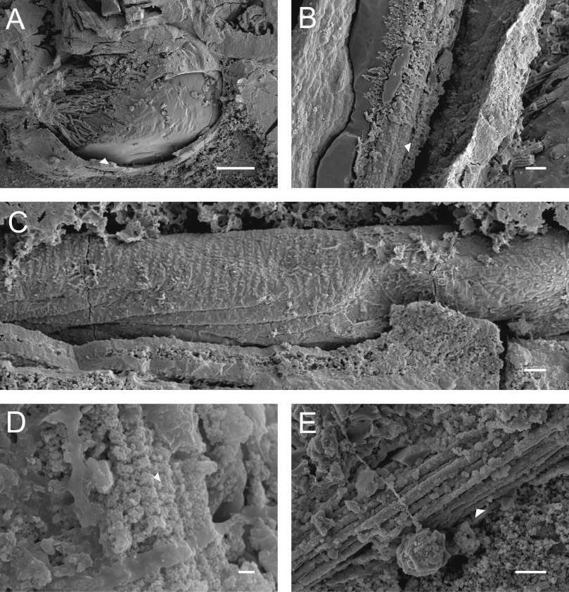 bf1a95118c97 The resin transfer technique: An application to insect fossils in ...