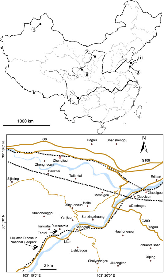 Lower Cretaceous turtle tracks from Hekou Group of Northwest China