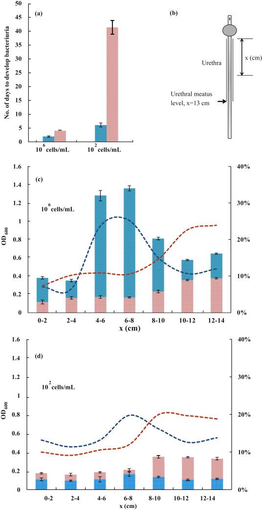 In-vitro antibacterial and anti-encrustation performance of