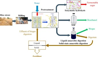 Enhancing ethanol and methane production from rice straw by