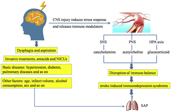 Research progress in stroke-induced immunodepression syndrome (SIDS on tables and diagrams, sketches and diagrams, charts and diagrams, notes and diagrams, manuals and diagrams, tools and diagrams, maps and diagrams, plans and diagrams, documents and diagrams, models and diagrams, drawings and diagrams, blueprints and diagrams, parts and diagrams,