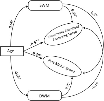 Superficial White Matter As A Novel Substrate Of Age Related