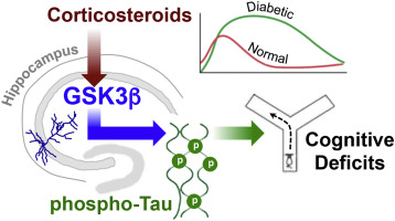 Glucocorticoid Mediated Activation Of Gsk3b Promotes Tau
