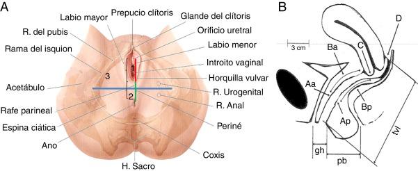 Comparación de la distancia anogenital y antropometría del periné en ...