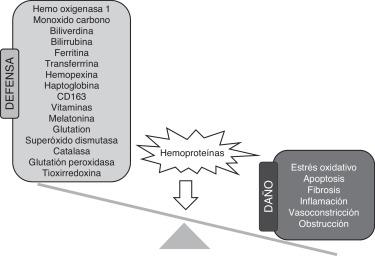 hematuria paroxística nocturna fisiopatología de la diabetes
