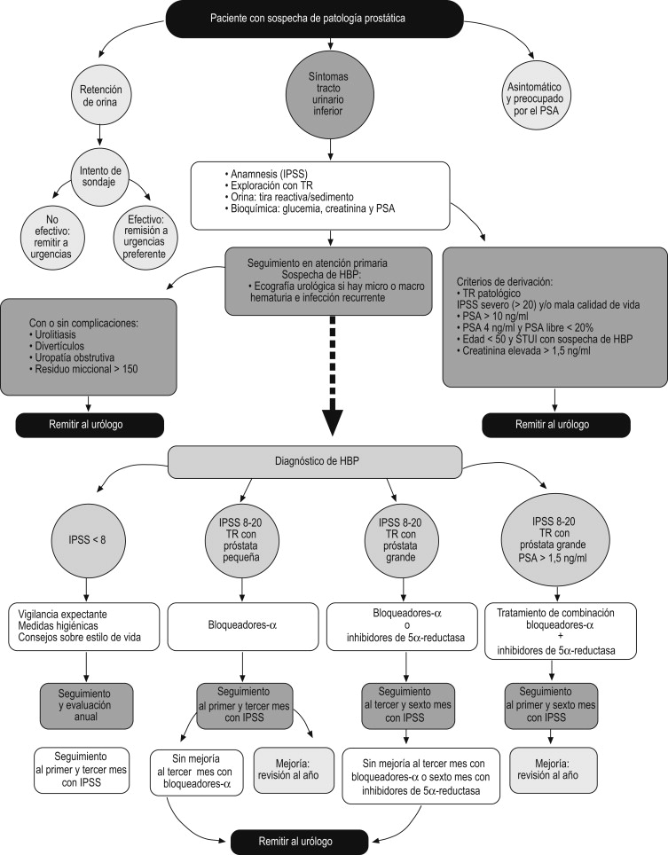 Capítulo 12 hiperplasia prostática benigna causa HPB