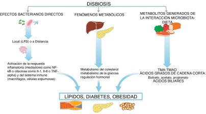 ácidos grasos de cadena corta y diabetes