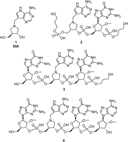 Oligonucleotide Transition State Analogues Of Saporin L3