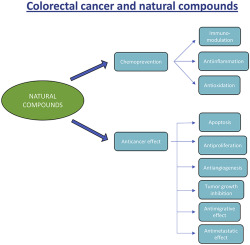 Natural Compounds And Combination Therapy In Colorectal Cancer Treatment Sciencedirect