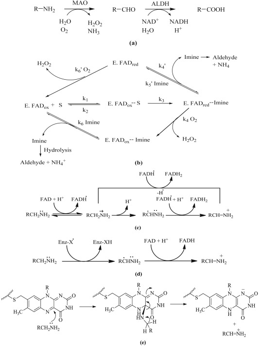 Privileged scaffolds as MAO inhibitors: Retrospect and prospects