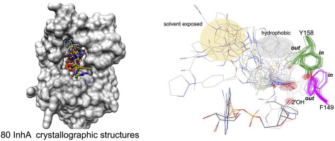 An overview on crystal structures of InhA protein: Apo-form