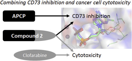 CD73 inhibition by purine cytotoxic nucleoside analogue