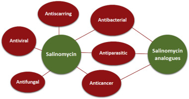 Salinomycin and its derivatives – A new class of multiple