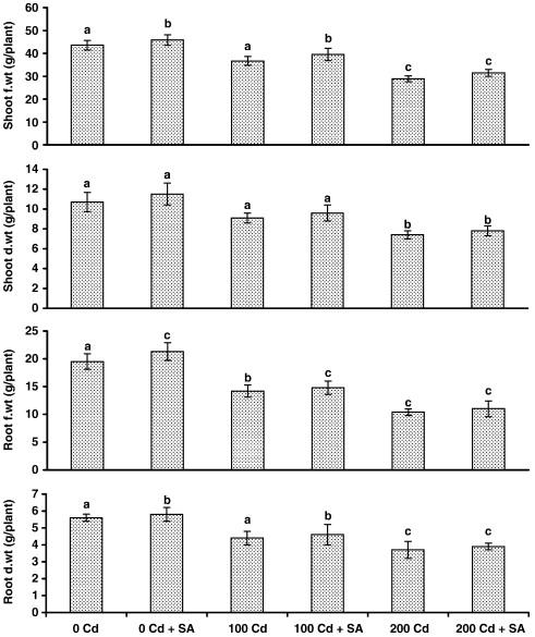 Cadmium Induced Oxidative Damage In Mustard Brassica Juncea L