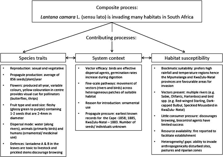 Invasion dynamics of Lantana camara L  (sensu lato) in South