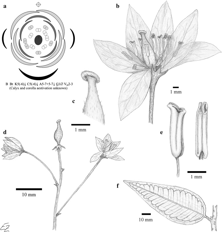 Floral diagram of lotus search for wiring diagrams floral diagram of lotus images gallery ccuart Choice Image