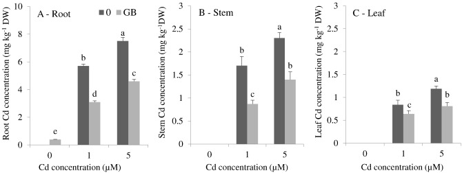 Cadmium stress in cotton seedlings: Physiological