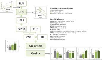 Breadmaking quality and yield response to the green leaf