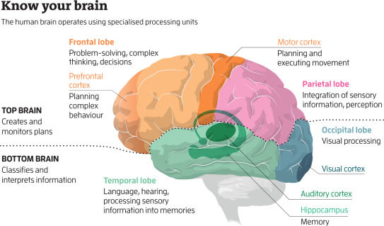 Eight wonders of the human brain - ScienceDirect
