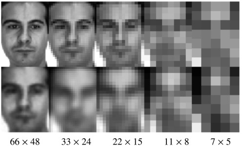 Face recognition in low-quality images using adaptive sparse