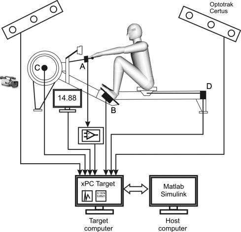 The measurement setup for real-time biomechanical analysis of rowing ...