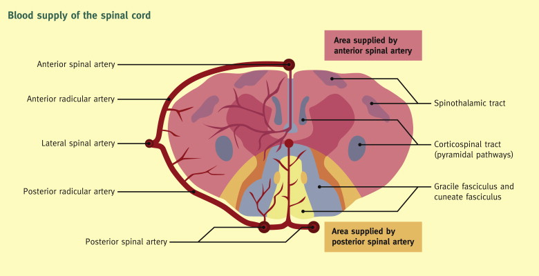 Pathophysiology, presentation and management of spinal cord injury ...