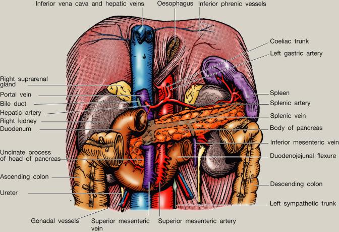 Anatomy Of The Pancreas And Spleen Sciencedirect