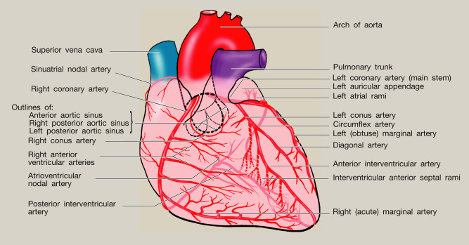 Anatomy of the heart - ScienceDirect