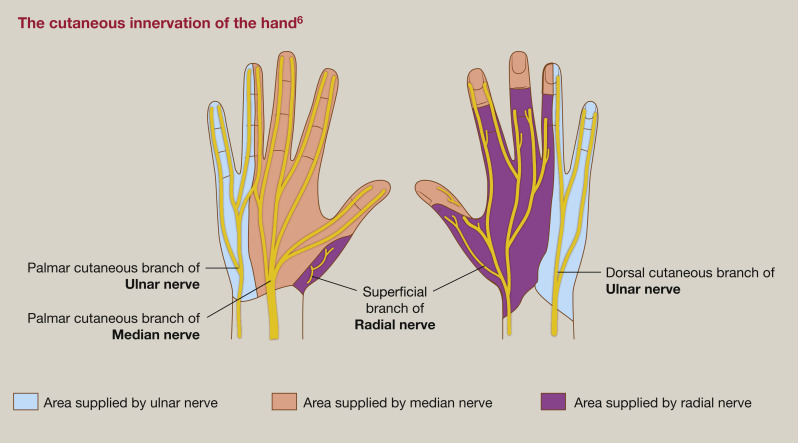 Peripheral nerve compression syndromes of the upper limb