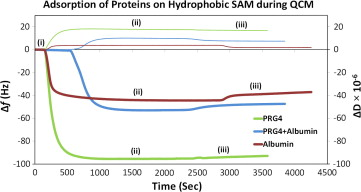 Role of hydrophobicity on the adsorption of synovial fluid proteins