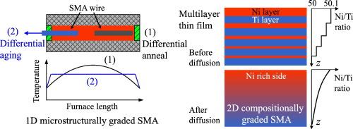 Functionally graded shape memory alloys: Design, fabrication and