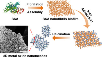 Bovine serum albumin fibrous biofilm template synthesis of metallic nanomeshes for surface-enhanced Raman scattering and electrocatalytic detection X Wu, L Lv, X Han, C Li - Materials & Design, 2020, 192, 108777