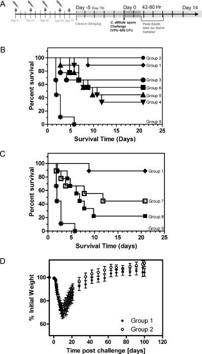 immunology and serology turgeon pdf freegolkes