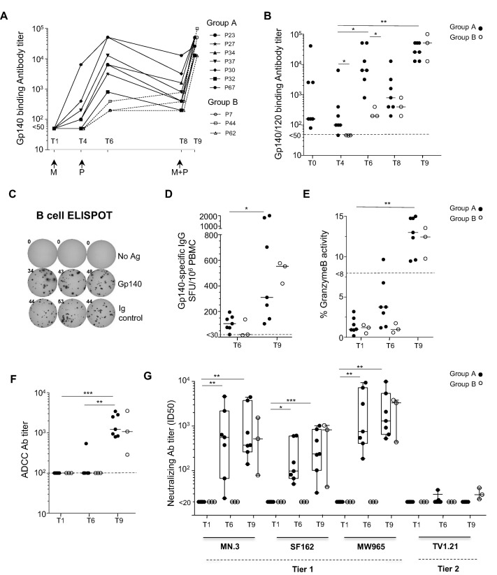 Dna Mva Protein Vaccination Of Rhesus Macaques Induces Hiv Specific