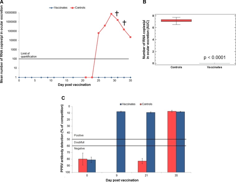 Development of a PPRV challenge model in goats and its use