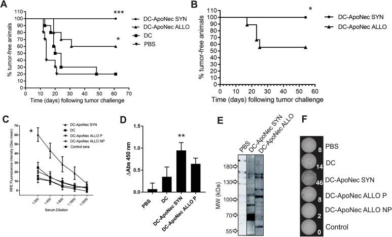 Syngeneic B16-F1 cells are more efficient than allogeneic