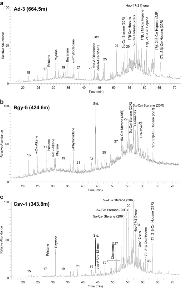 Facies evolution and stratigraphic correlation in the early