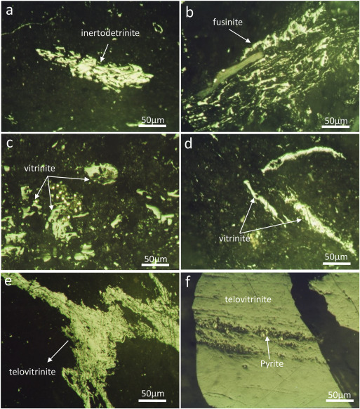 Nanoscale pore structure and fractal characteristics of a